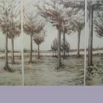 Study of Cedars, Intaglio Print