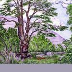 Lucma Tree, Peru