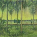Study of Cedars
