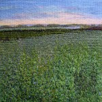 Sagaponack Flower Field no.1, 10''x10''